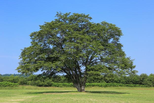 ふたたびこの木へ