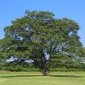 Photos: ふたたびこの木へ