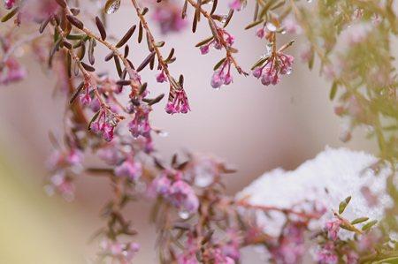 咲いています・・・♪〜