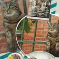 写真: そして、地下歩行空間を通り大丸へ向かい…岩合さんの『世界ネコ歩き...