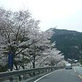 国道168号線~桜と崩落と復旧工事