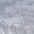 Photos: 夏の最中に冬の八甲田フォト一枚。
