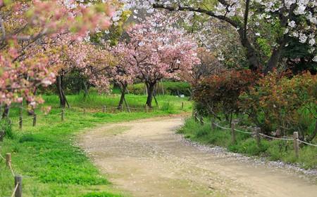 尼崎農業公園37