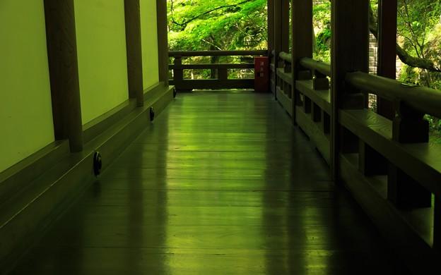 永観堂30