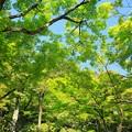 写真: 銀閣寺30