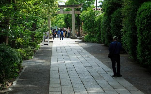 鶴岡八幡宮29