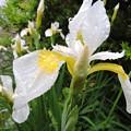 雨の花達-3