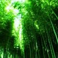 Photos: green green