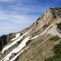 白馬岳を見上げる