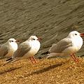 Photos: 三匹の鳥