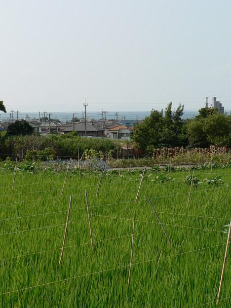岬町 夏景色 (12)