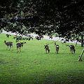 奈良公園の鹿さん達