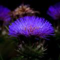 Photos: Purple