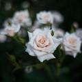 Photos: White