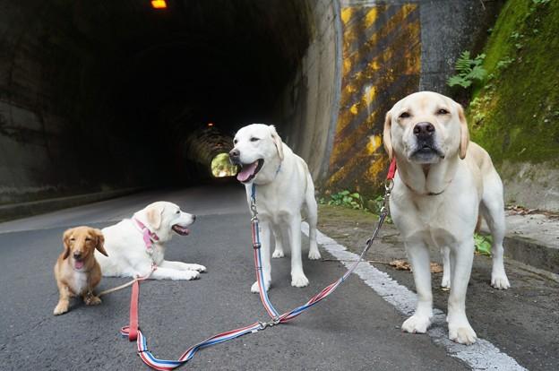 トンネルのある道