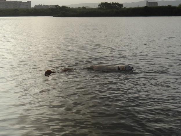 いっぱい泳いだ