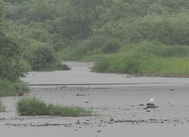 Photos: 雨の犀川