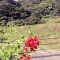Photos: 名も知らぬ赤い花