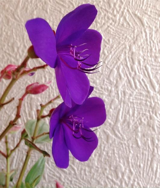 マツエクの必要なしお花のマツゲ