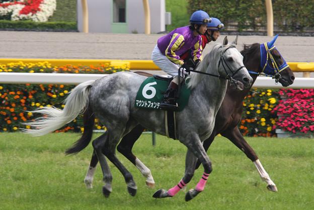 Photos: マウントフォンテン 返し馬(09/06/13・第11回 東京ジャンプステークス)