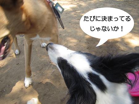 IMG_7188_1