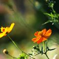 Photos: 黄色い季節