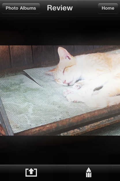 Photos: 猫シャー