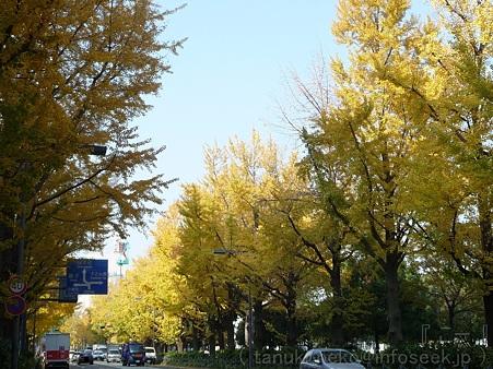 111130-横浜 紅葉  山下公園通り (7)