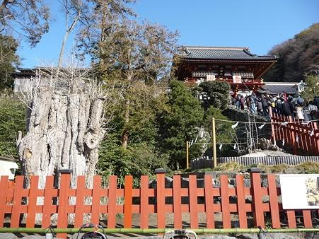 120104-八幡さま (11)