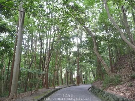 150615-月読宮 (7)