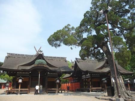 150615-住吉大社 (12)