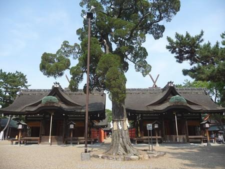 150615-住吉大社 (18)