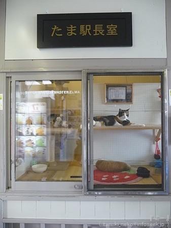 09828 喜志駅 たま駅長 (3)