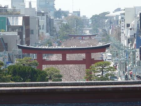 110406-八幡さま (35)