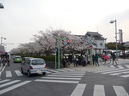 110411-鎌倉 段葛 (22)