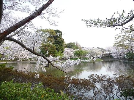 110411-鶴岡八幡宮 源平池 (12)