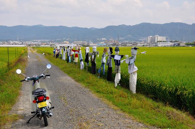 巨椋池干拓田にて