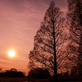Photos: 夕景の高木