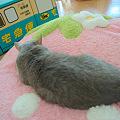 写真: 20120121_152856-raw