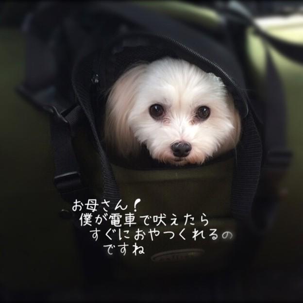 Photos: image1