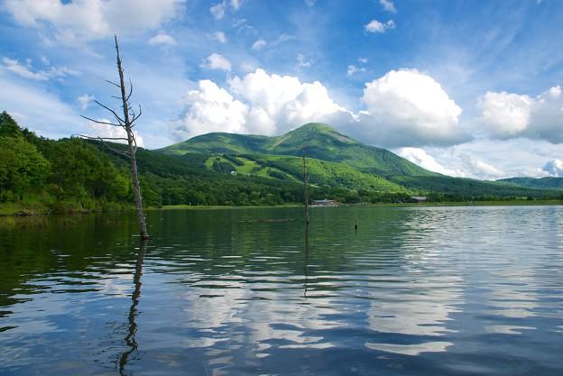 女神湖より蓼科山を望む