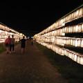 Photos: 護国神社みたままつり  2