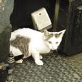 隅を歩く猫ちゃん  3