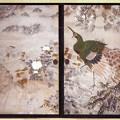 Photos: 石川雲蝶の襖絵「孔雀遊戯図」