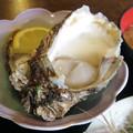 Photos: 岩牡蠣
