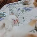 Photos: 寝相の悪いママ