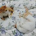 Photos: ママ起きてにゃ