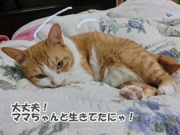 Photos: 可愛い寝相