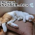 Photos: 梅雨は嫌いにゃ!