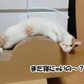 Photos: 体のストレッチ